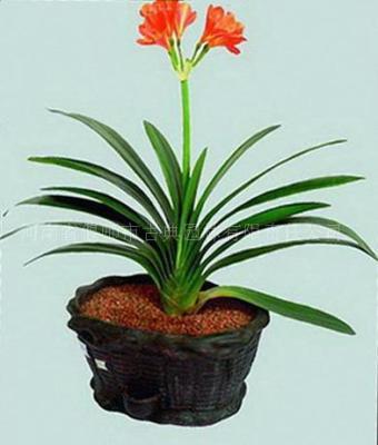 陶化营养土-种兰花的新型无土栽培基质