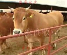 宜都適合養殖什么牛 當陽適合養殖什么牛